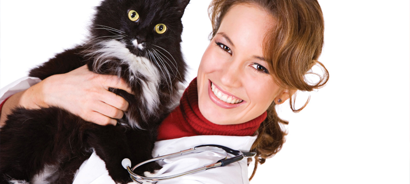 cat urinary tract disease