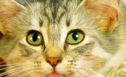 Стерилизация кошек и котов разного возраста