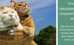 Перед тем как отвезти кошку на дачу