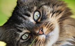 Стерилизация кошек – отзывы клиентов