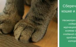 Антицарапки для кошки: плюсы и минусы