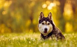 Обработка от клещей у собак