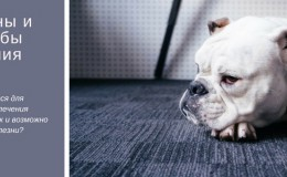 Лечение суставов у собак