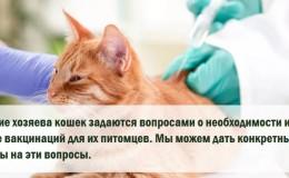 Вакцинация кошек - о чём следует помнить